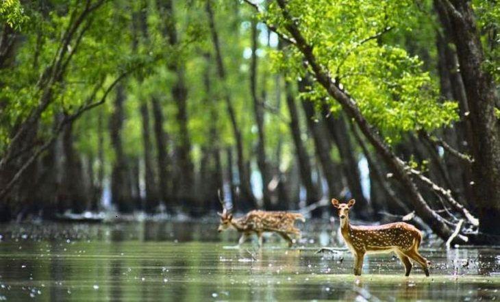 Recalling Sundarban